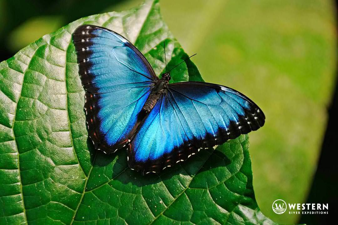Costa Rica Vacation Package Butterfly Azul