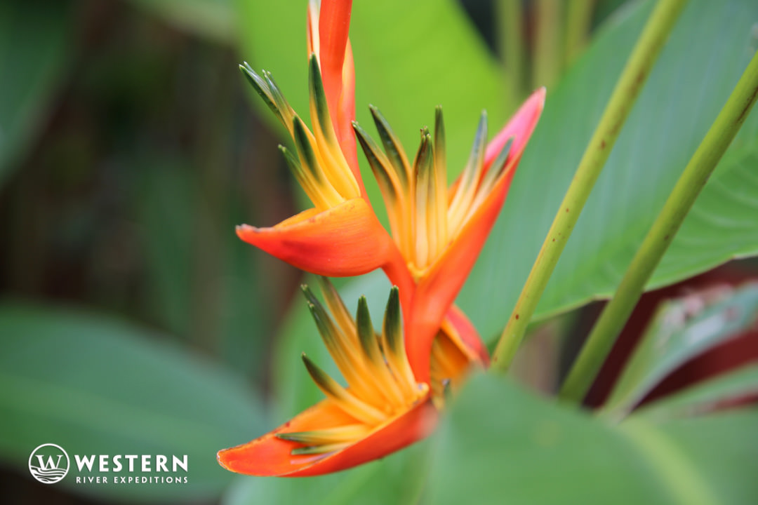 Costa Rica Vacation Package Flower 3