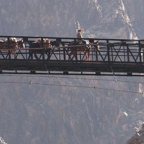 Kaibab Suspension Bridge & Phantom Ranch