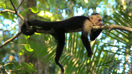 Costa Rica Vacation Package Monkey